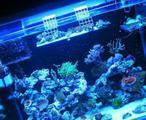 Аквариум морской, светильник и оборудование